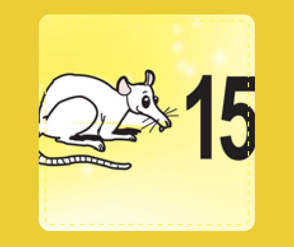 15 - Rat